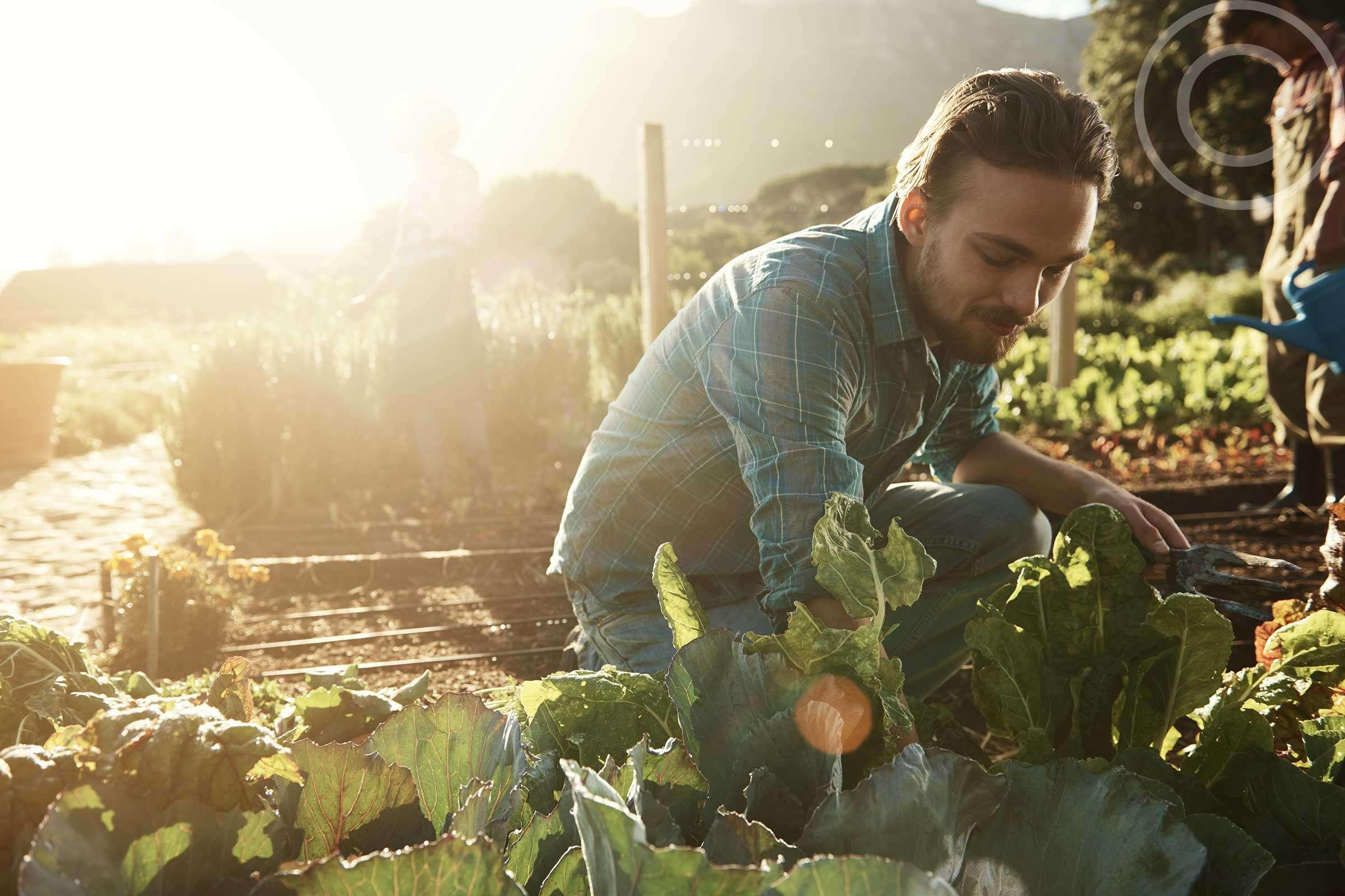 Protect Organic Farms