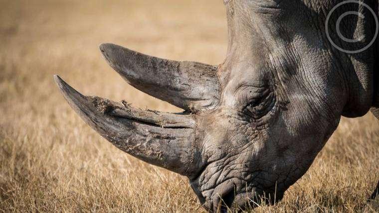 Africa's Most Endangered Wild Animals
